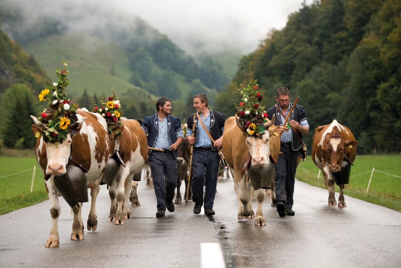 Tijdens de almabtrieb wordt zowel boer als vee feestelijk gekleed met traditionele kledij en bloemenkransen