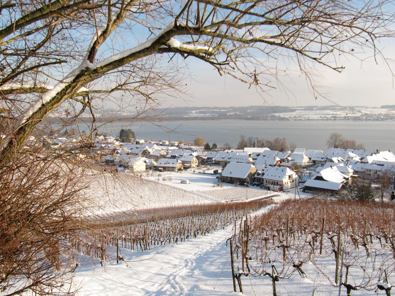 de wijngaarden van Le Vully
