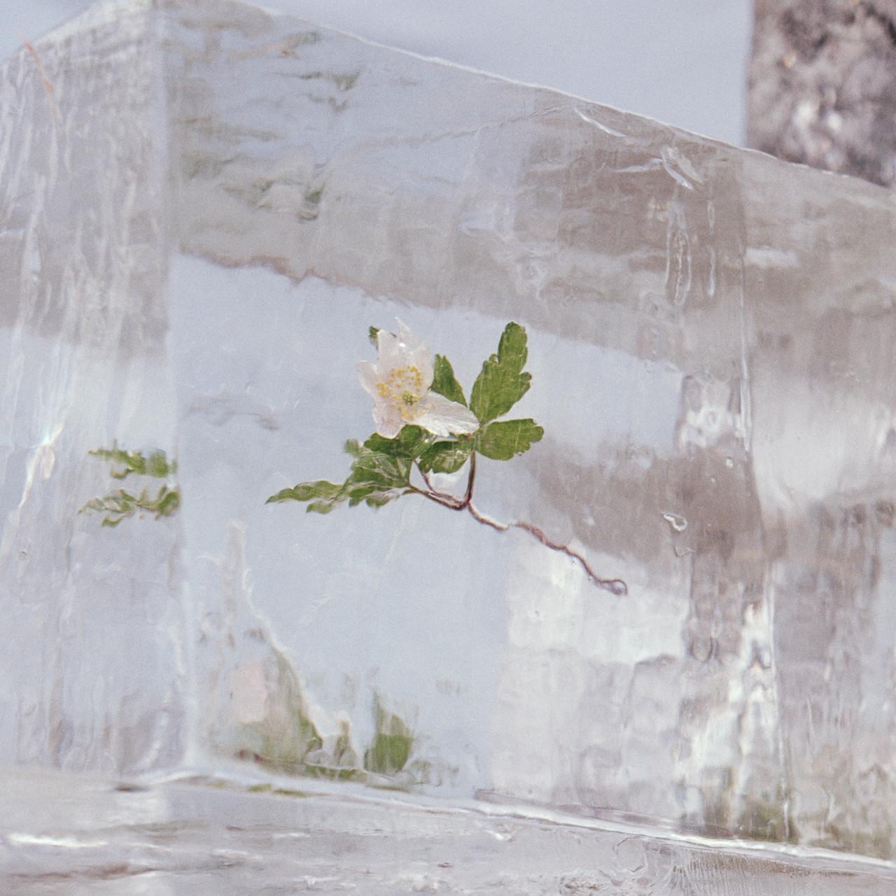 Deense band Efterklang komt met nieuw album Windflowers: Er is leven na de  pandemie - Reporters Online